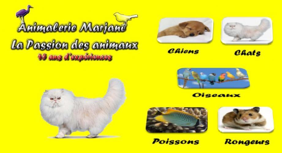 Animalerie Marjane , chiens , chat , poisson ,oiseau au maroc