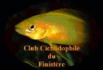 "Club Cichlidophile du Finistère  "" C.C.F. """