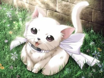 Donne moi ce que je veux & je te donnerai ce que tu veux 69485426chat-manga-jpg