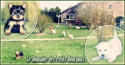 Le Domaine des Petits Bouchons