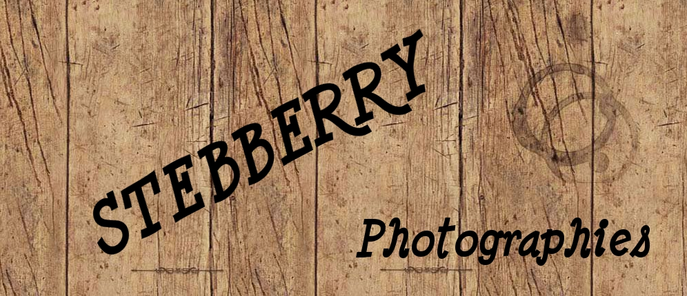 Stebberry Photographies
