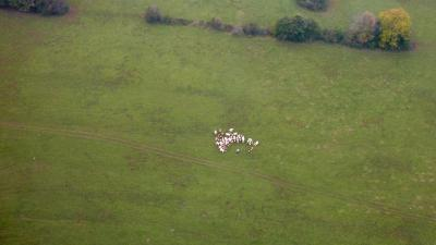 Bubu après sa vache monumentale en grande conversation avec les veaux