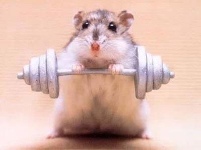 Hamster,le Nouveau Rocky