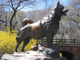 Balto  chien de traineau