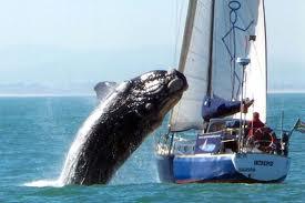 Une baleine s'écrase sur un bateau
