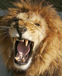 Énorme attaque de d'un Lion dans un cirque