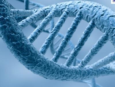 Que pensez vous de L'ADN
