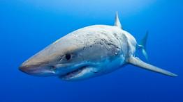 Attaque mortelle de requin aux Seychelles