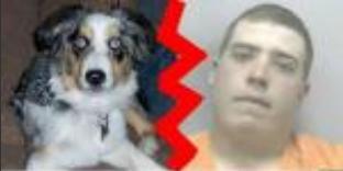 Incroyable Un  homme pris  en train de violer un chien