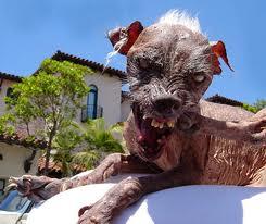 Le chien le plus moche du monde