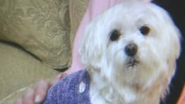 Des kidnappeurs de chiens réclament 226.000 euros de rançon ( Australie )