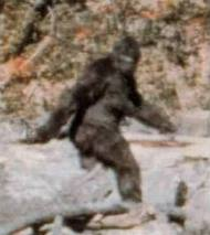 Mystére : Sasquatch et Bigfoot et Yéti (homonymie)