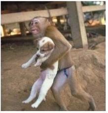 Un singe sauve un chien