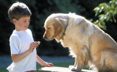 Insolite Un enfant sauvé par son chien