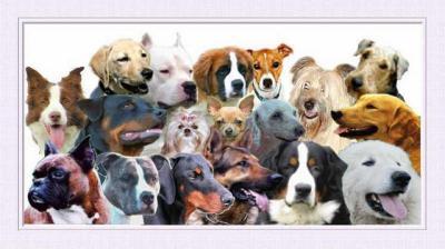 Les plus jolie nom de chien et chat 2011