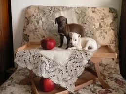 Hôtel cinq étoiles pour chien en Allemagne
