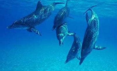 un dauphin sauve un surfer d'une attaques de requins
