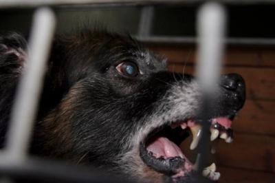 un homme dévoré par des chiens affamés
