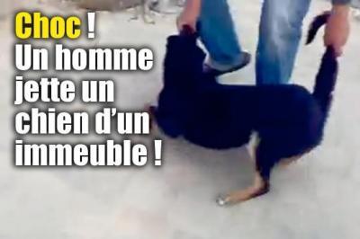 un homme jette un chien d'un immeuble