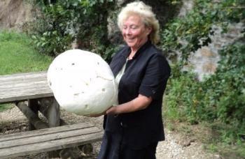 Le plus gros champignon du monde