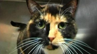 Un chat est retrouvé à 3.000 km du lieu de sa disparition