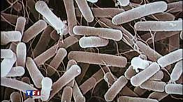 Que pensez vous des bactérie tueuse qui inquiète l'Allemagne