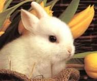 Un lapin héroïque sauve une famille des flammes