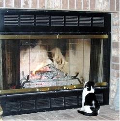 Que pensez vous du chat sauve son maître d'un incendie !