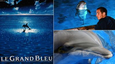 Joséphine, le dauphin du Grand Bleu, nous a quittés