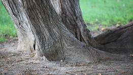 le corps d'une femme trouvé en une forêt dans l'Yonne