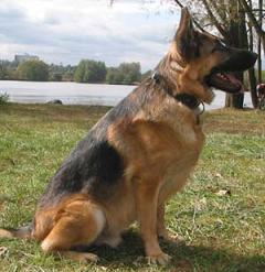 Insolite Un chien sauve son maître en téléphonant au 911