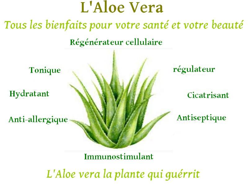 Les vertus de l 39 aloe vera - Ou trouver de l aloe vera en plante ...