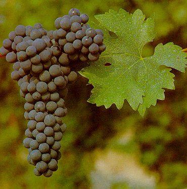 Les vins de France avec sortir loisirs.com