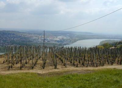 Les vins de la France vous passionnent, alors organisez votre séjour dans un vignoble