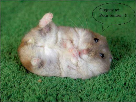 Tout sur les hamsters - Hamster gratuit ...