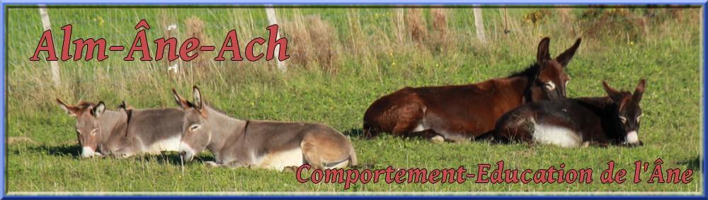 Âne, Anon,Anesse tout connaître sur les ânes avec Alm-Âne-Ach.Eduquer son âne, Comprendre son âne, soigner son âne et bien le nourrir, tous ce qu'il faut savoir sur les ânes.