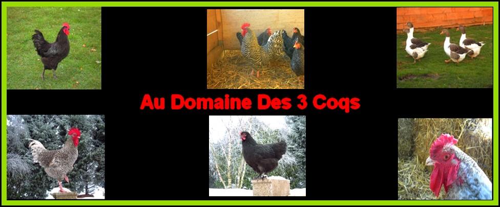 http://www.e-monsite.com/s/2011/03/21/audomainedes3coqs/96892360sans-titre-2-jpg.jpg