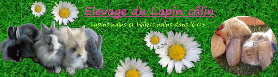 Elevage du Lapin Câlin