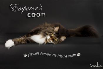 Emperor's coon