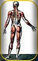 Thérapie Manuelle Articulaire et Vertébrale