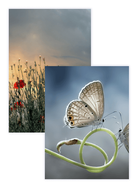 Pixabay photos